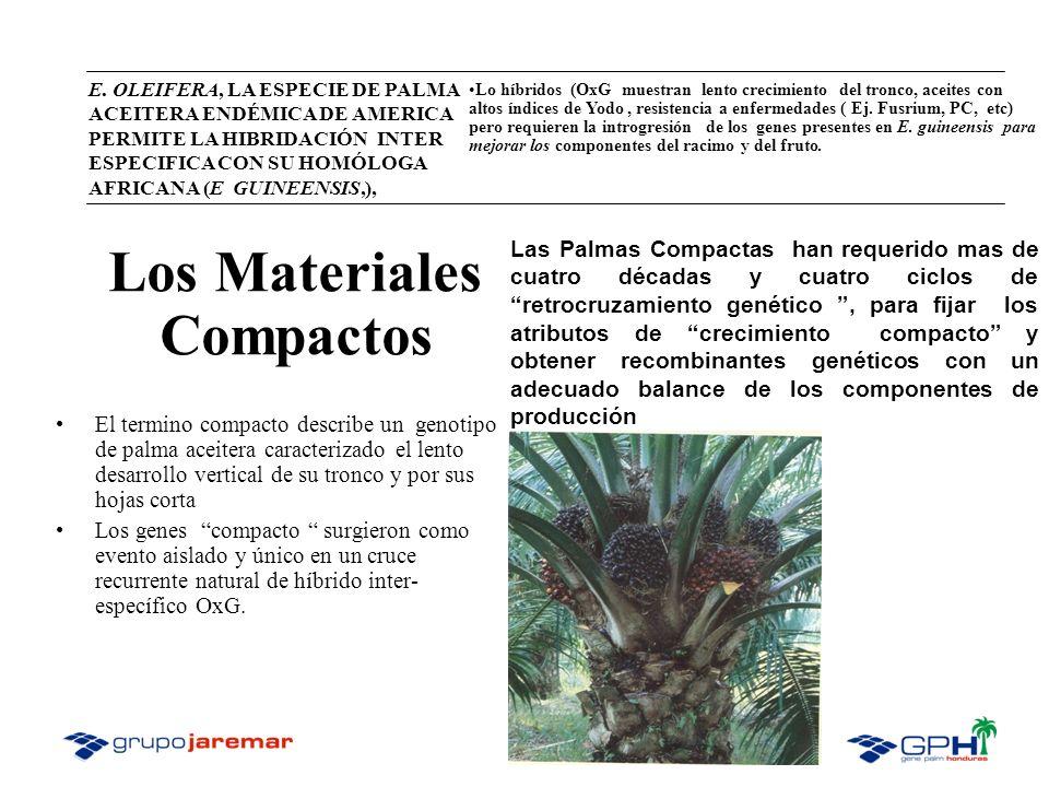 Los Materiales Compactos