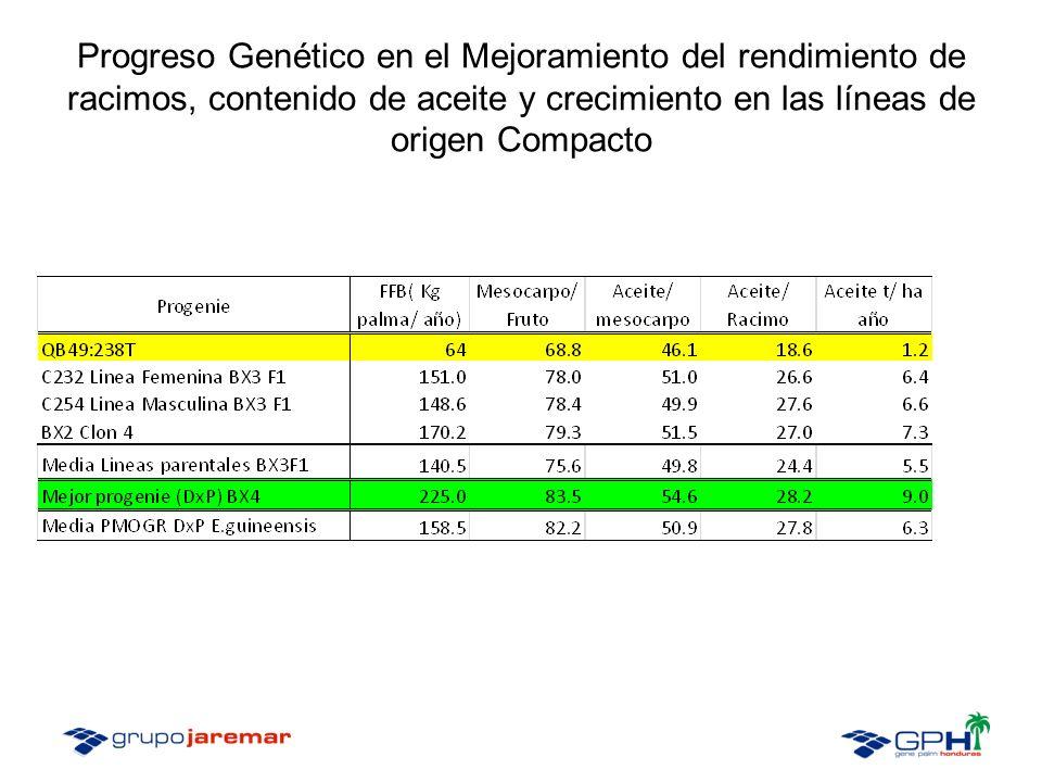 Progreso Genético en el Mejoramiento del rendimiento de racimos, contenido de aceite y crecimiento en las líneas de origen Compacto