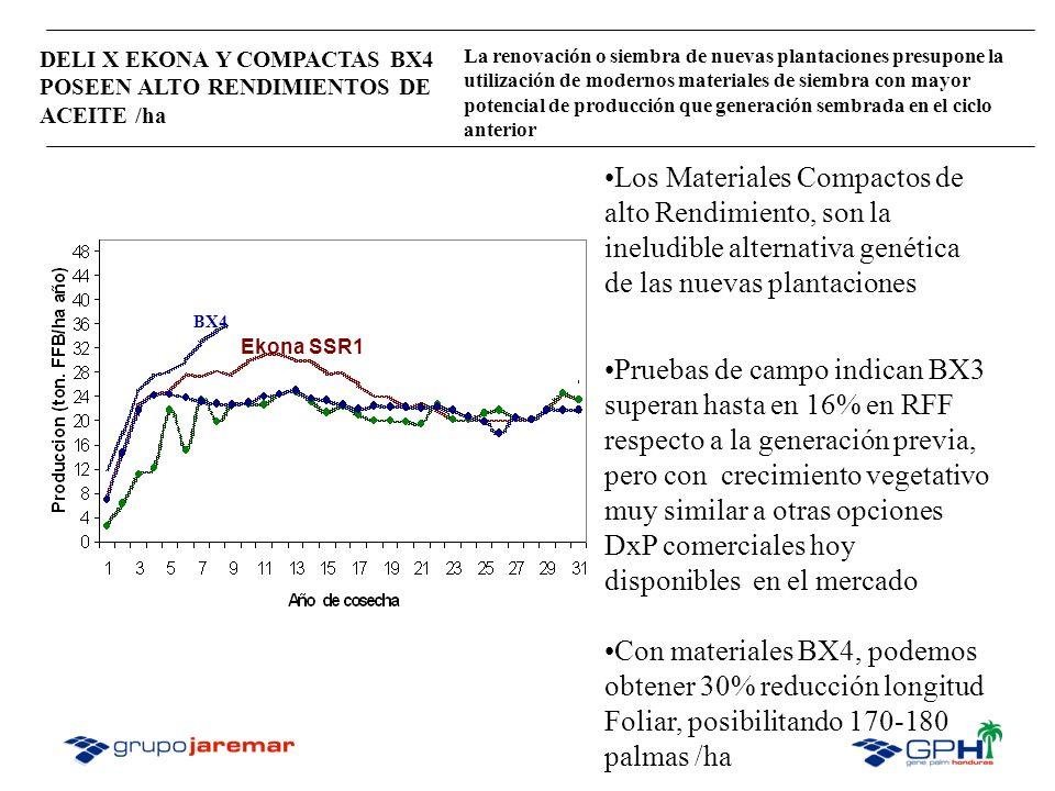 DELI X EKONA Y COMPACTAS BX4 POSEEN ALTO RENDIMIENTOS DE ACEITE /ha