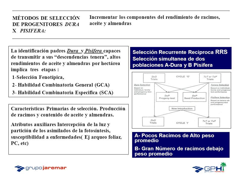 MÉTODOS DE SELECCIÓN DE PROGENITORES DURA X PISIFERA: