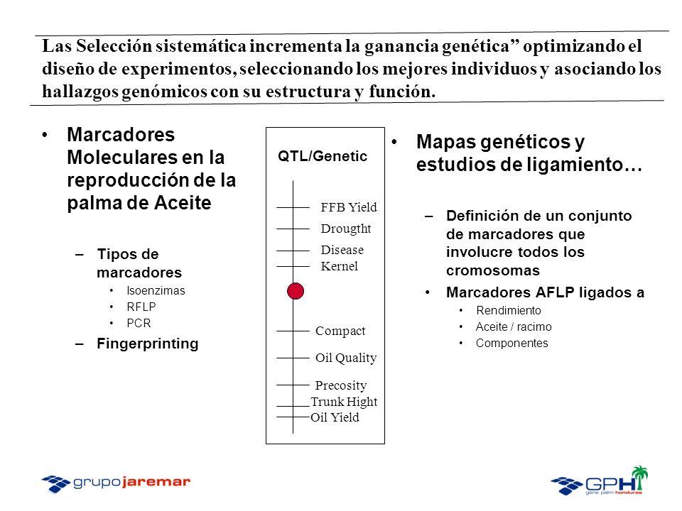Marcadores Moleculares en la reproducción de la palma de Aceite