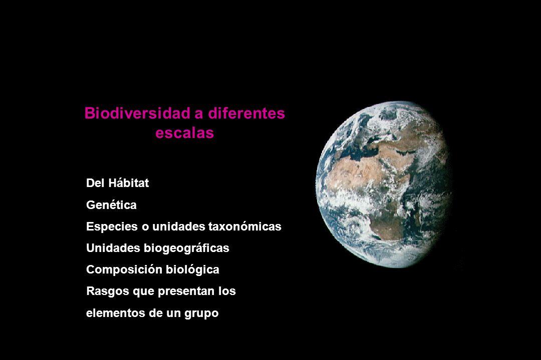 Biodiversidad a diferentes escalas