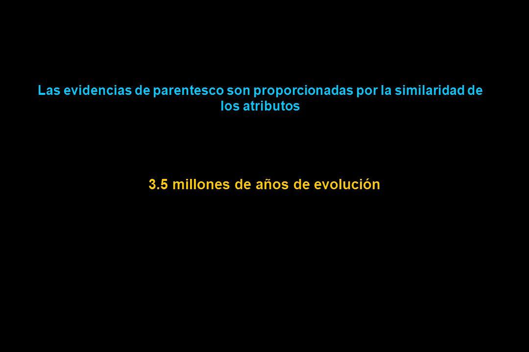 3.5 millones de años de evolución
