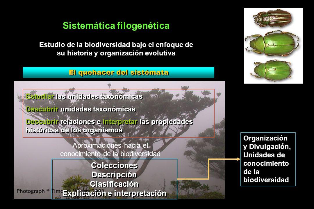 Sistemática filogenética Explicación e interpretación