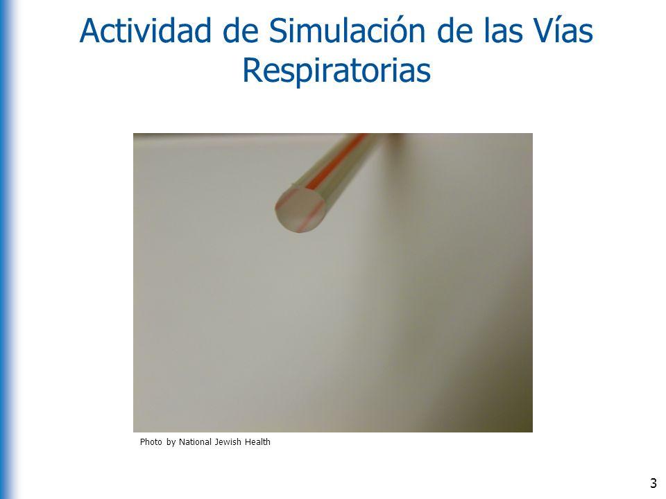 Actividad de Simulación de las Vías Respiratorias