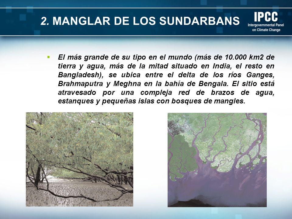 2. MANGLAR DE LOS SUNDARBANS