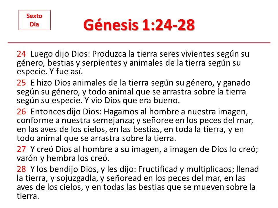 Génesis 1:24-28 Sexto. Día.