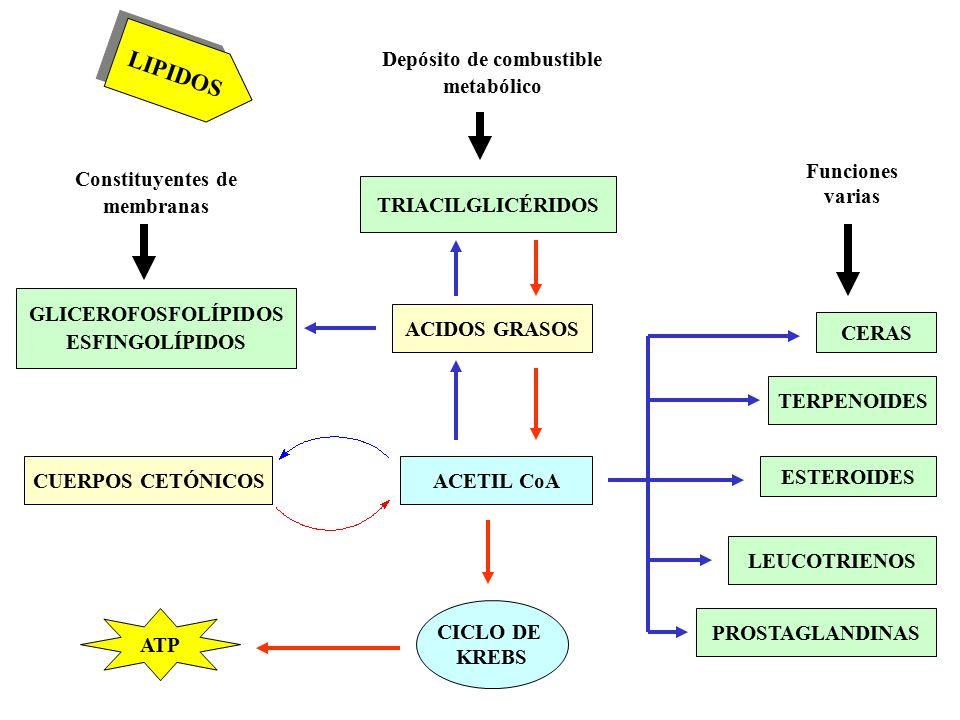 terpenoides y esteroides
