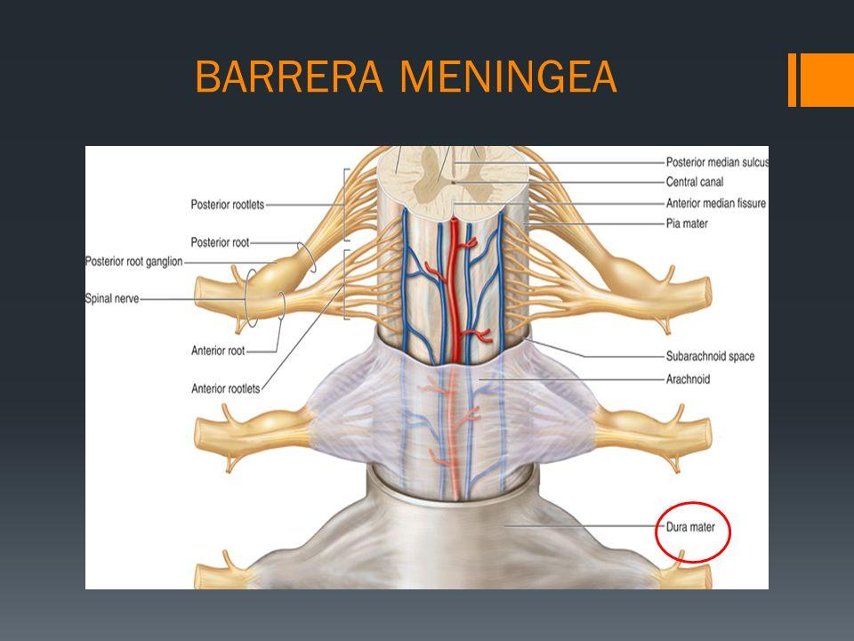 BARRERA MENINGEA