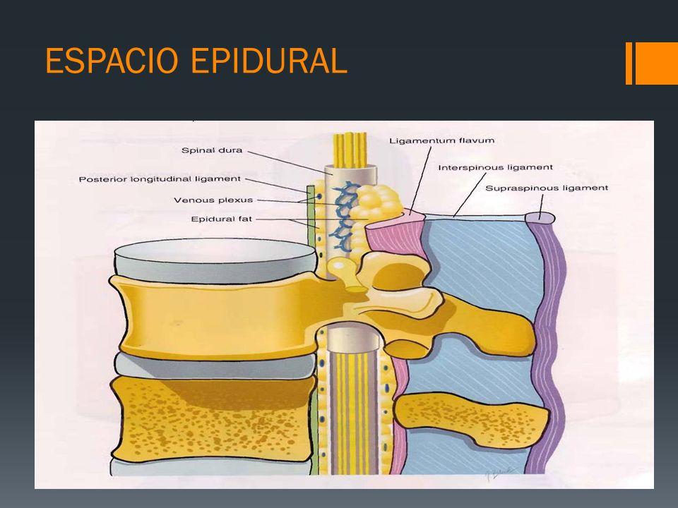 ESPACIO EPIDURAL La grasa epidural ejerce de reservorio de fármacos lipofílicos.