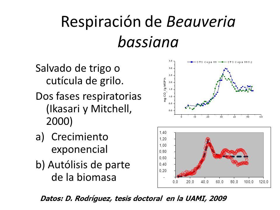 Respiración de Beauveria bassiana