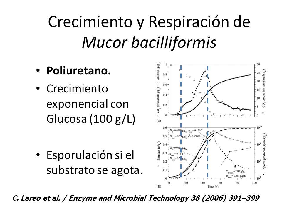 Crecimiento y Respiración de Mucor bacilliformis