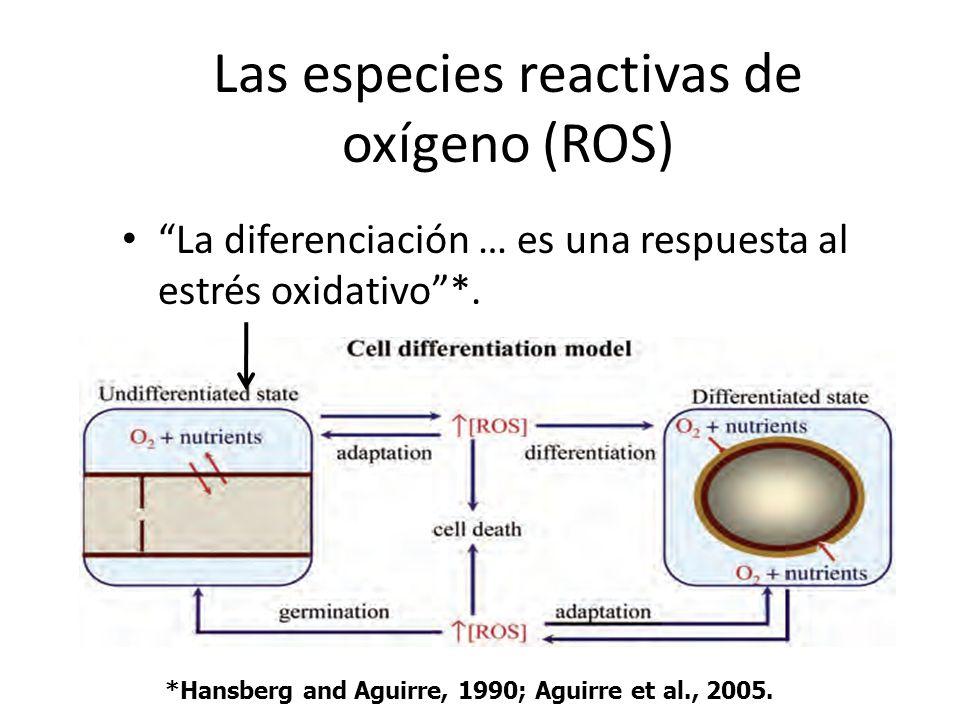Las especies reactivas de oxígeno (ROS)