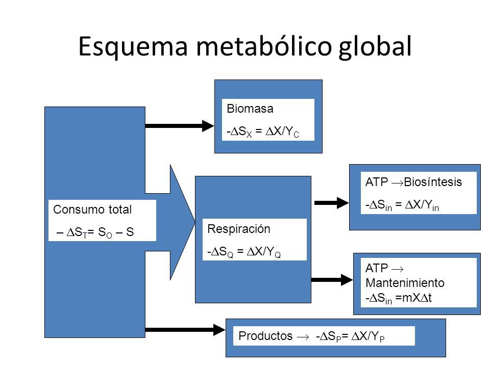 Esquema metabólico global