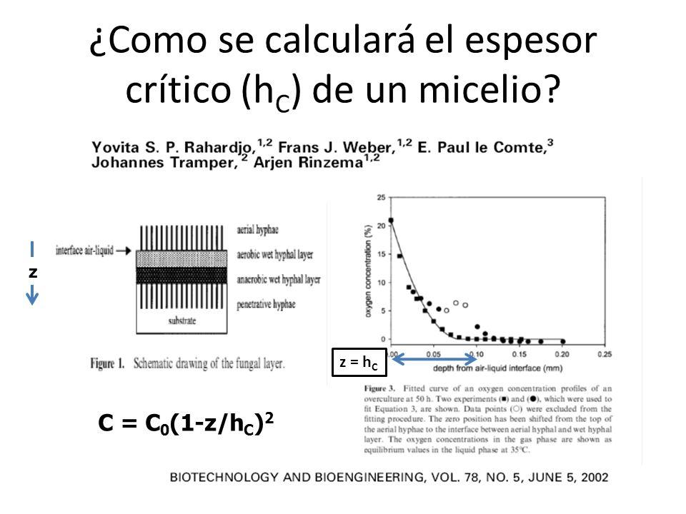 ¿Como se calculará el espesor crítico (hC) de un micelio