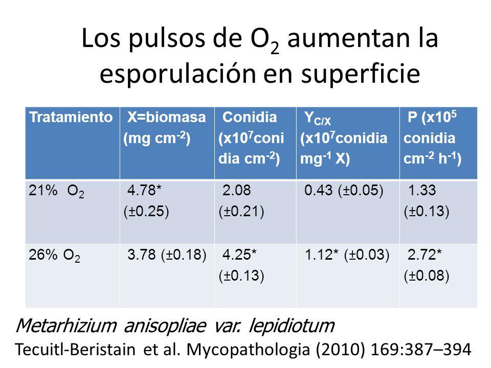 Los pulsos de O2 aumentan la esporulación en superficie