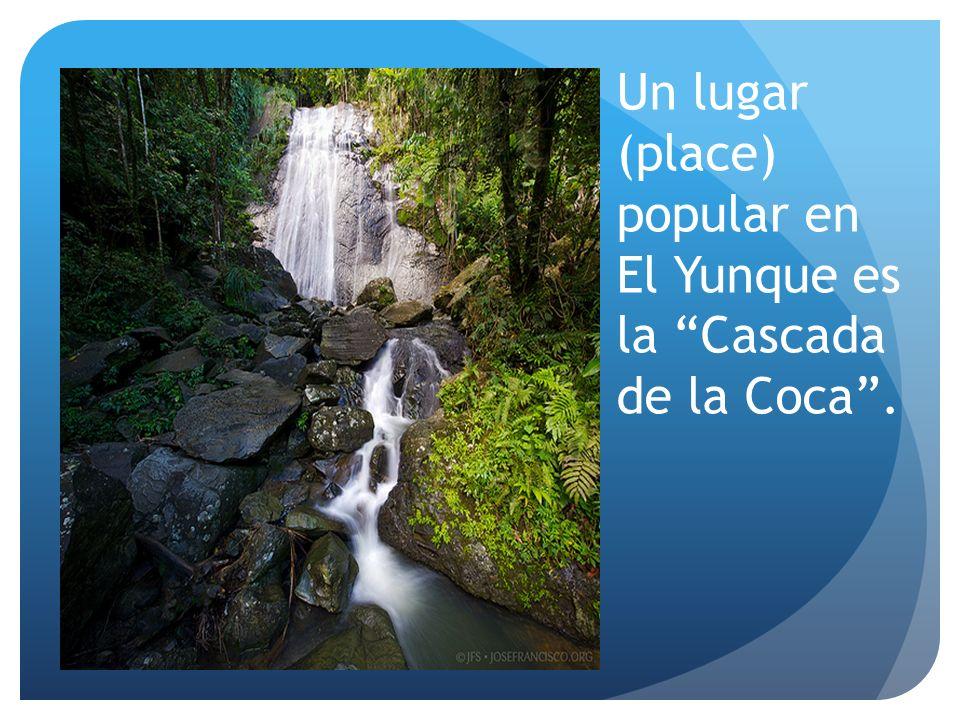 Un lugar (place) popular en El Yunque es la Cascada de la Coca .