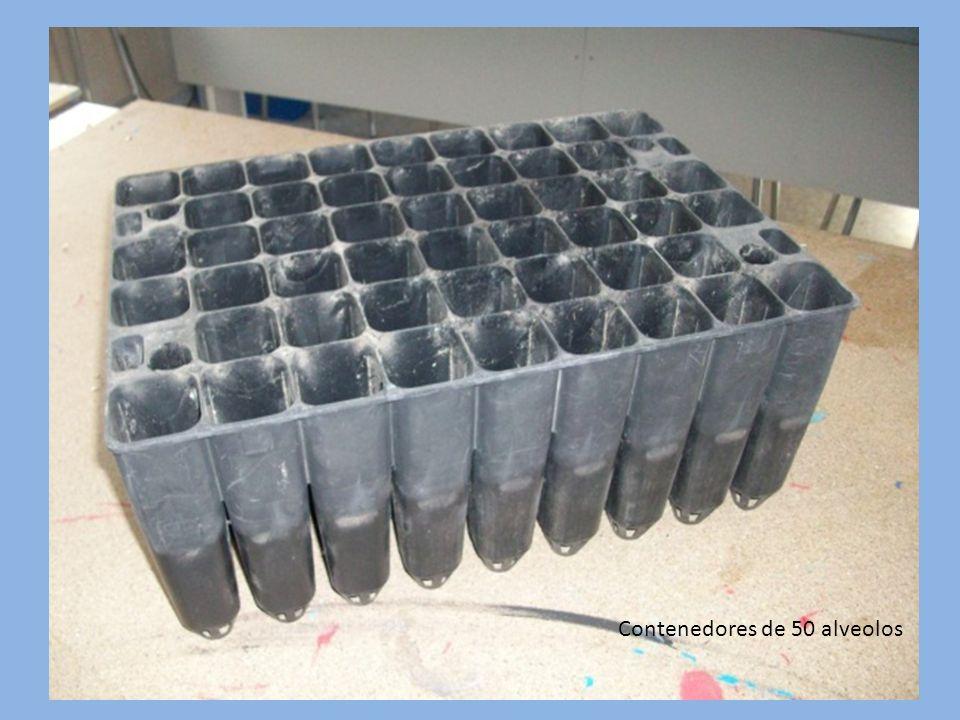 Contenedores de 50 alveolos