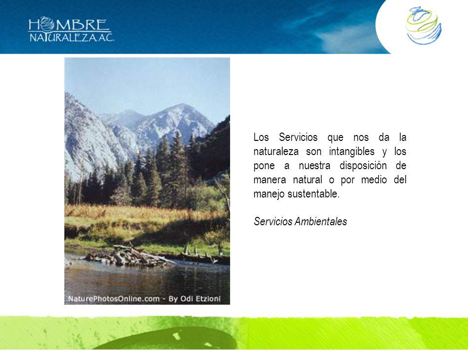 Los Servicios que nos da la naturaleza son intangibles y los pone a nuestra disposición de manera natural o por medio del manejo sustentable.