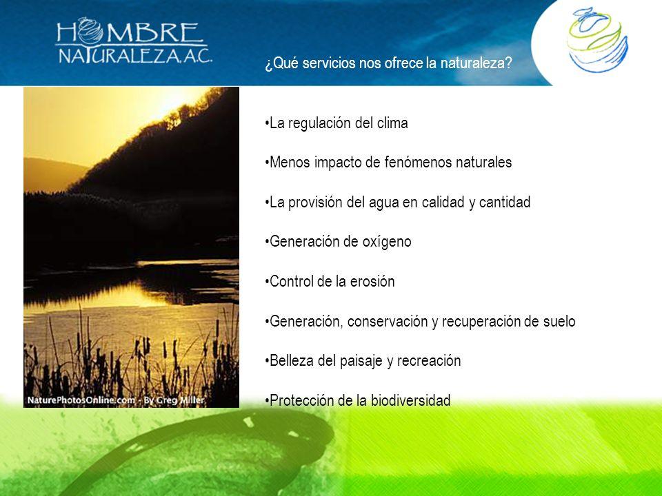 ¿Qué servicios nos ofrece la naturaleza