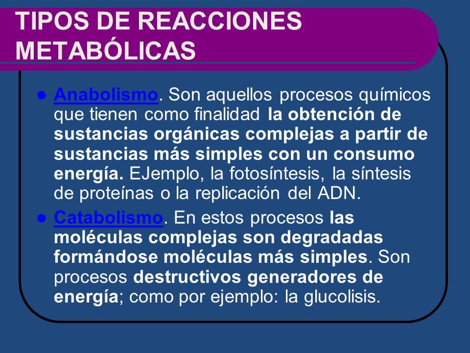 TIPOS DE REACCIONES METABÓLICAS