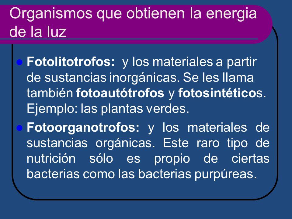 Organismos que obtienen la energia de la luz