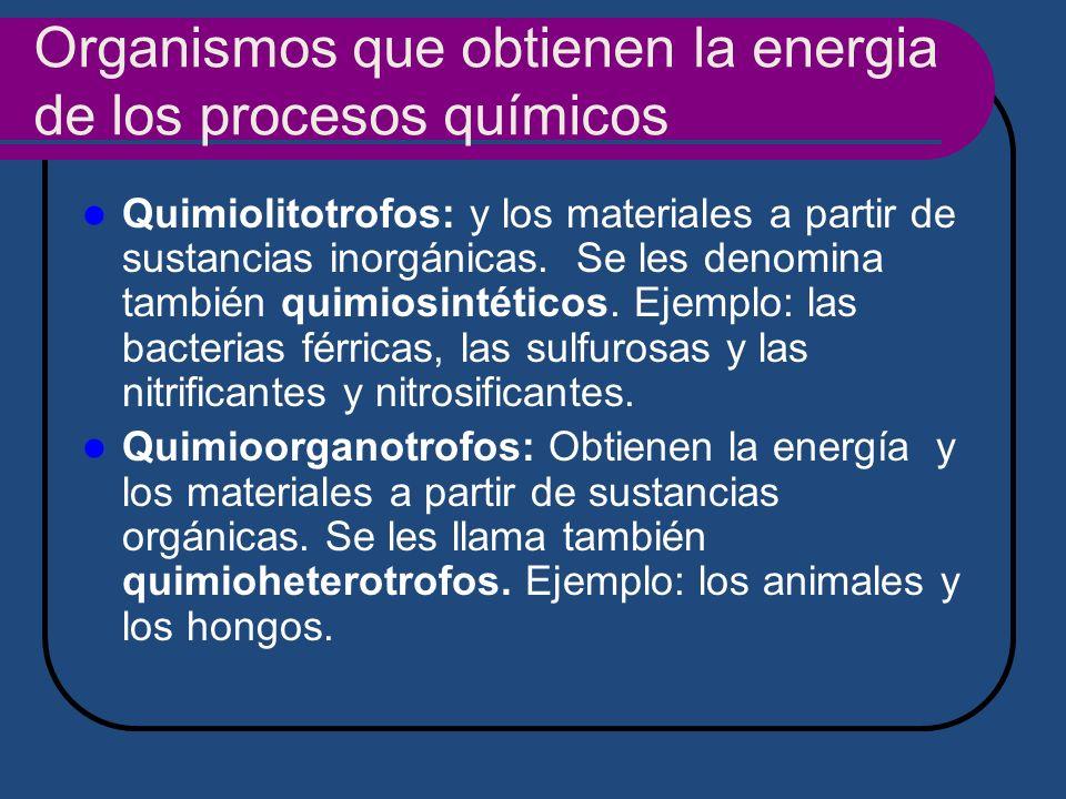 Organismos que obtienen la energia de los procesos químicos