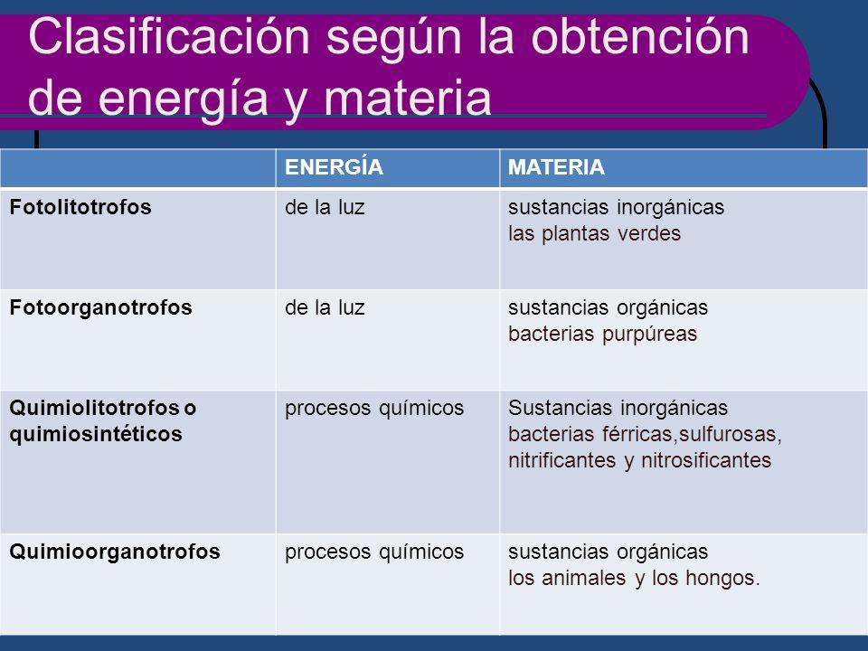 Clasificación según la obtención de energía y materia