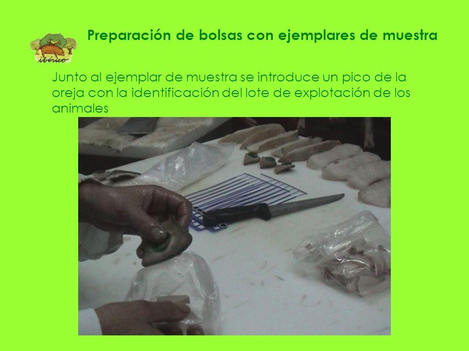 Preparación de bolsas con ejemplares de muestra