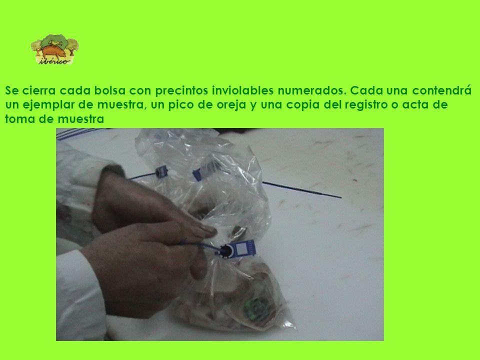 Se cierra cada bolsa con precintos inviolables numerados