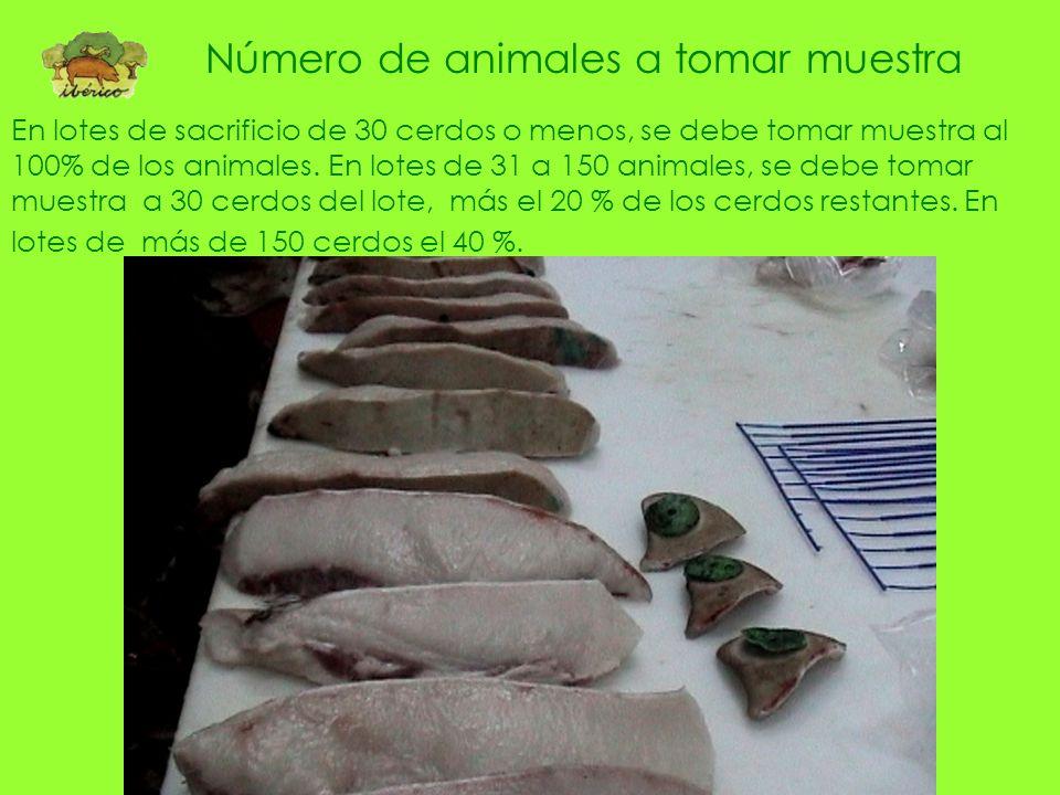 Número de animales a tomar muestra
