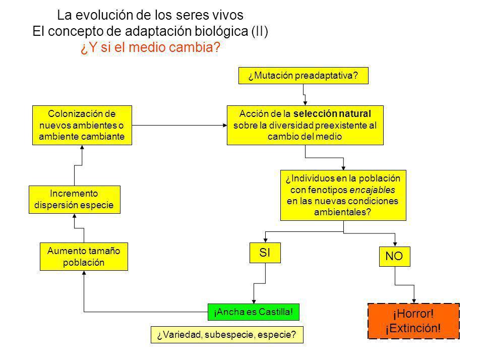 La evolución de los seres vivos El concepto de adaptación biológica (II) ¿Y si el medio cambia