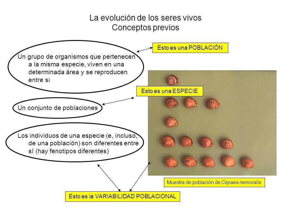 La evolución de los seres vivos Conceptos previos