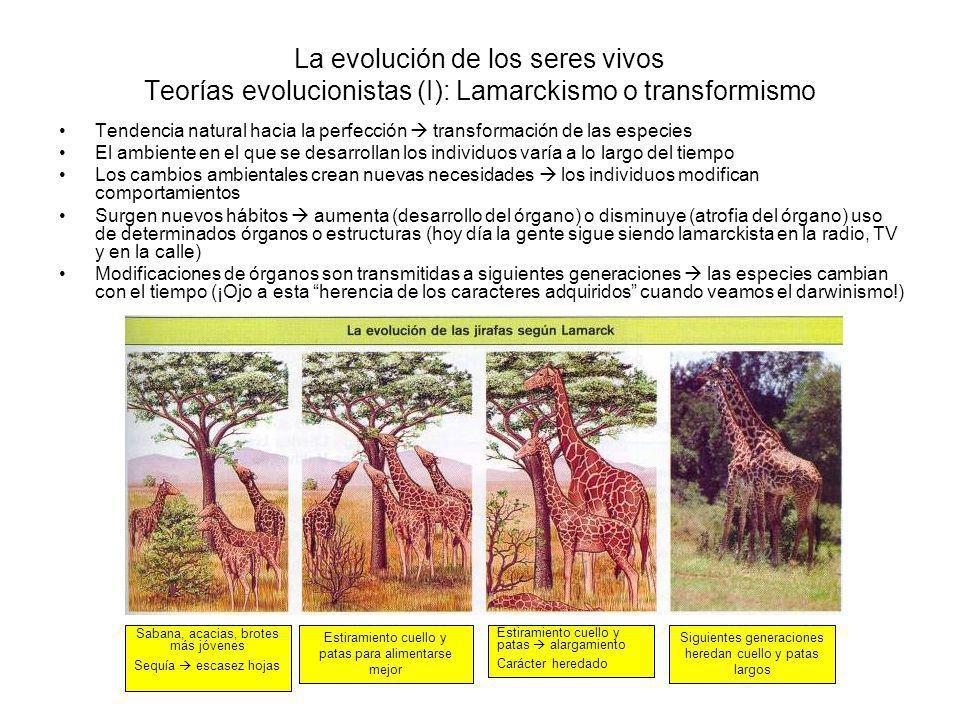 La evolución de los seres vivos Teorías evolucionistas (I): Lamarckismo o transformismo
