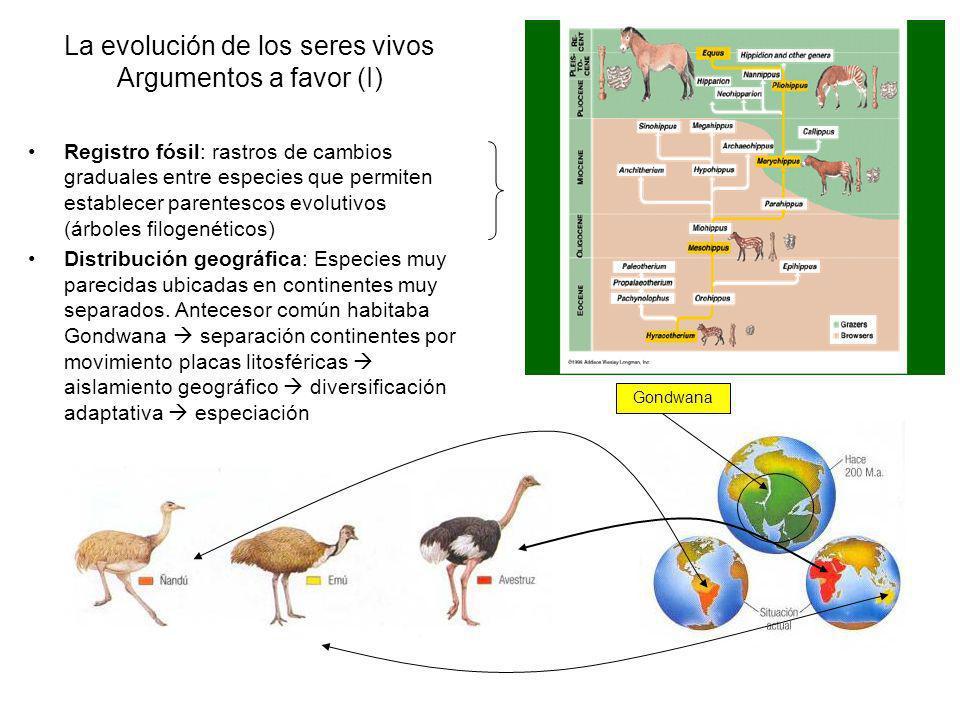 La evolución de los seres vivos Argumentos a favor (I)