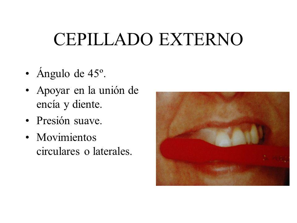 CEPILLADO EXTERNO Ángulo de 45º. Apoyar en la unión de encía y diente.