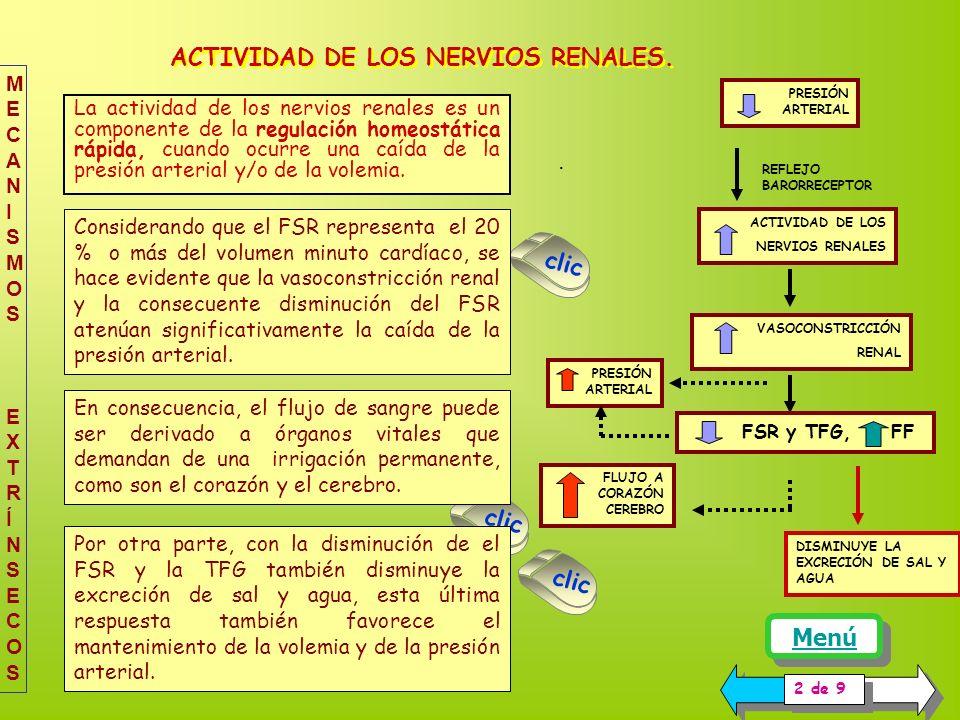 ACTIVIDAD DE LOS NERVIOS RENALES.