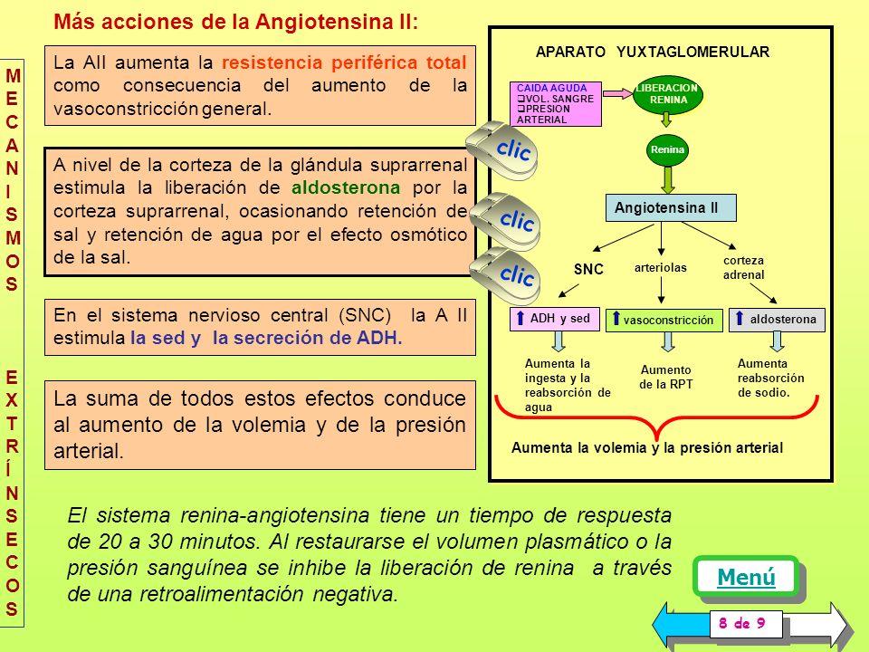 Más acciones de la Angiotensina II: