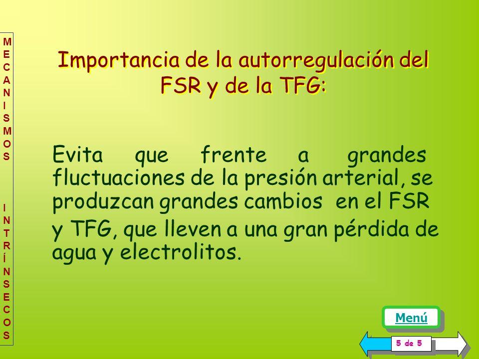 Importancia de la autorregulación del FSR y de la TFG: