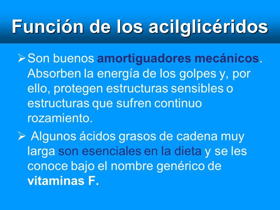 Función de los acilglicéridos