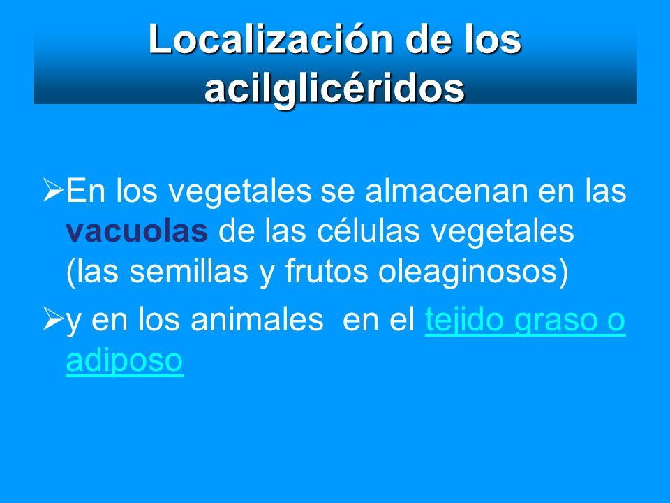 Localización de los acilglicéridos