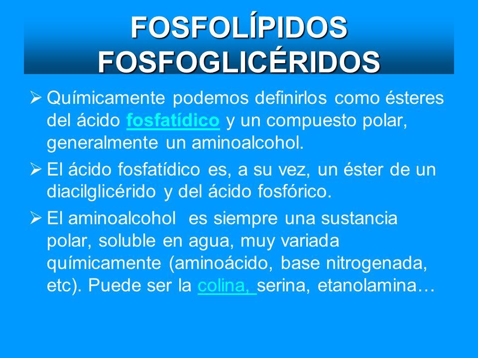 FOSFOLÍPIDOS FOSFOGLICÉRIDOS
