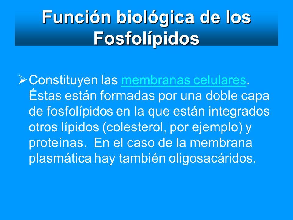 Función biológica de los Fosfolípidos