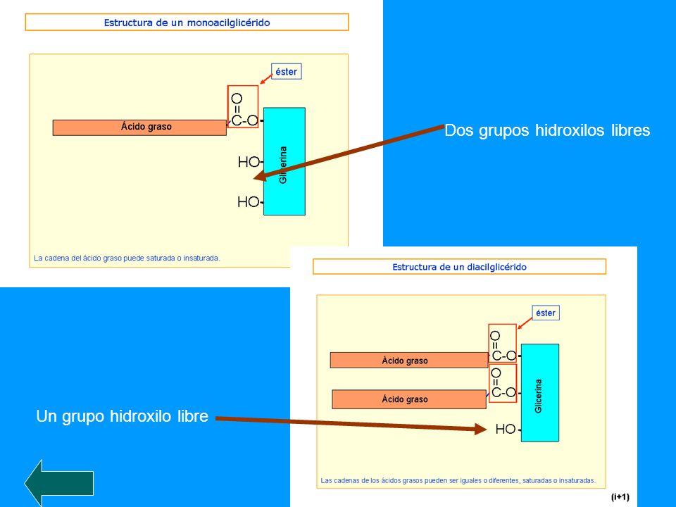 Dos grupos hidroxilos libres