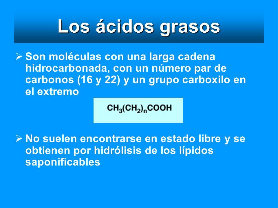Los ácidos grasos Son moléculas con una larga cadena hidrocarbonada, con un número par de carbonos (16 y 22) y un grupo carboxilo en el extremo.