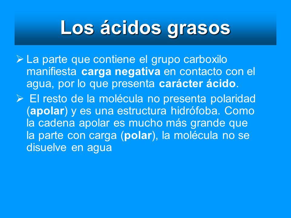 Los ácidos grasos La parte que contiene el grupo carboxilo manifiesta carga negativa en contacto con el agua, por lo que presenta carácter ácido.