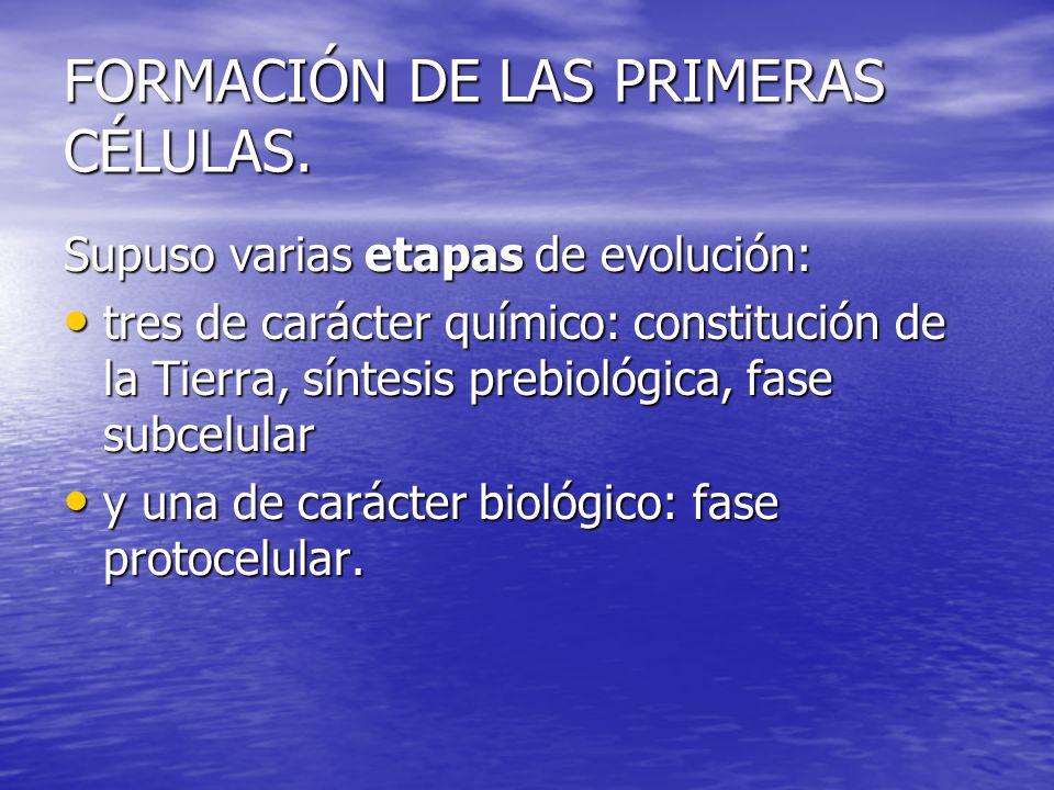 FORMACIÓN DE LAS PRIMERAS CÉLULAS.