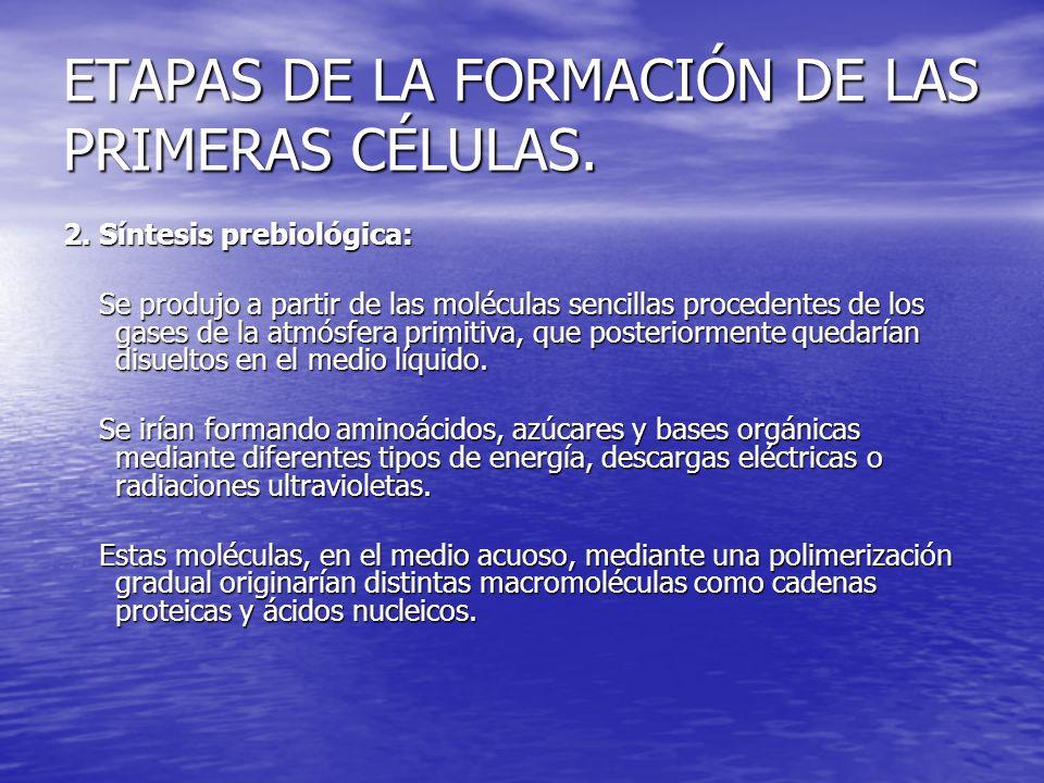 ETAPAS DE LA FORMACIÓN DE LAS PRIMERAS CÉLULAS.