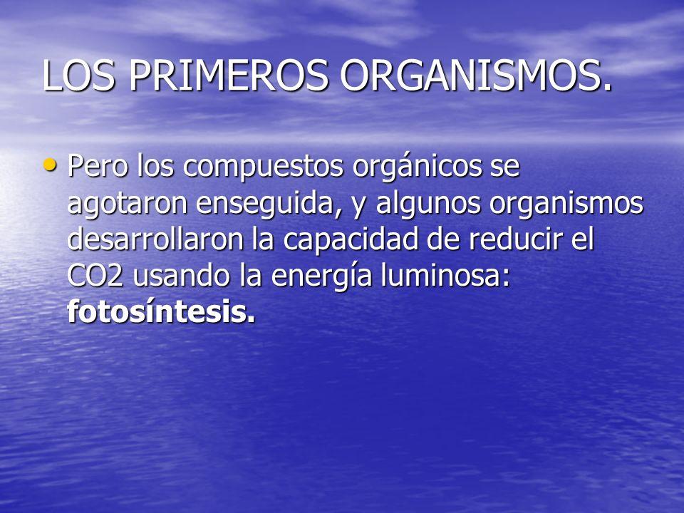 LOS PRIMEROS ORGANISMOS.