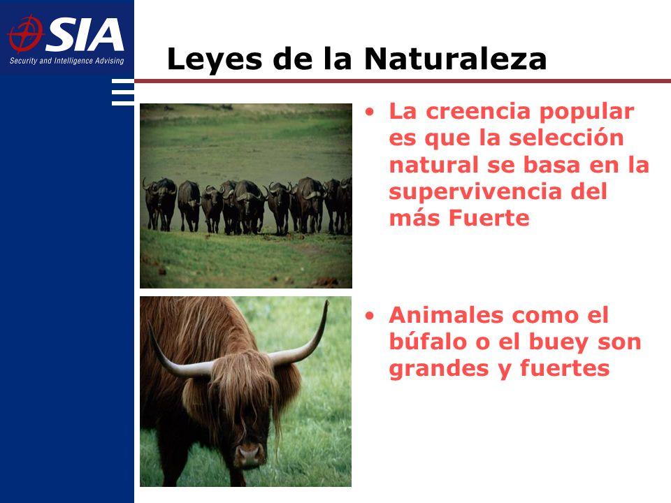 Leyes de la Naturaleza La creencia popular es que la selección natural se basa en la supervivencia del más Fuerte.